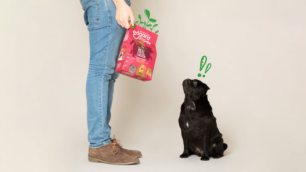 Pooch looking at sustainable kibble bag