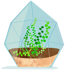 Illustration of baby tears plant in a terrarium.