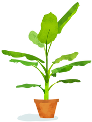Illustration of banana plant.