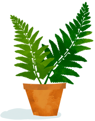 Illustration of fern.