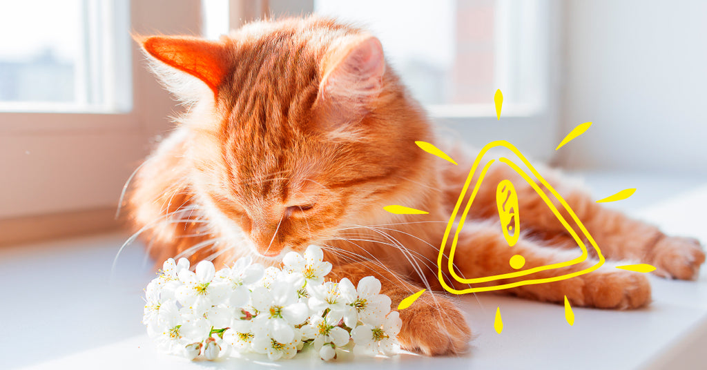Cat sniffing flowers.