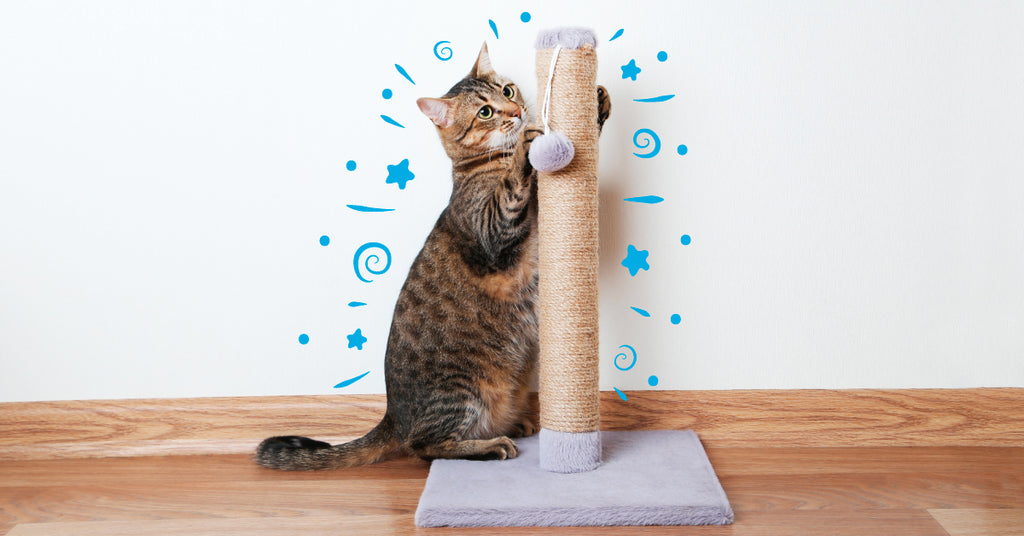 Cat scratching a scratching post.