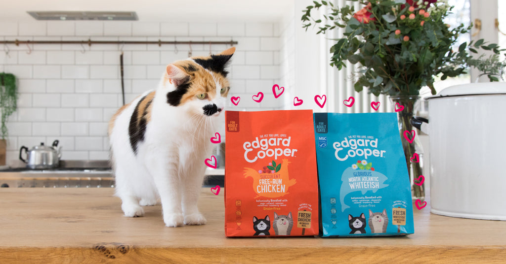Cat with Edgard & Cooper food.