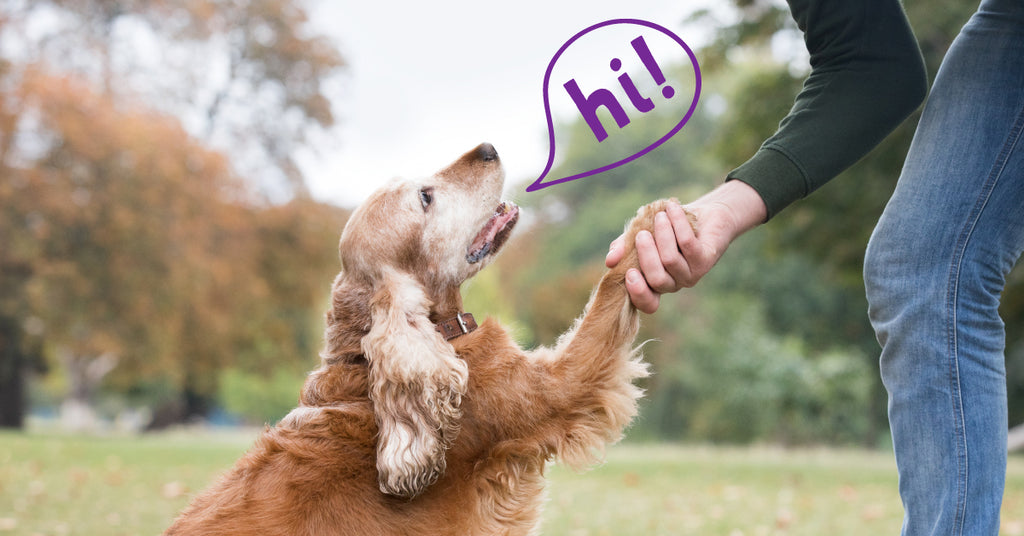 Dog communicating with human.