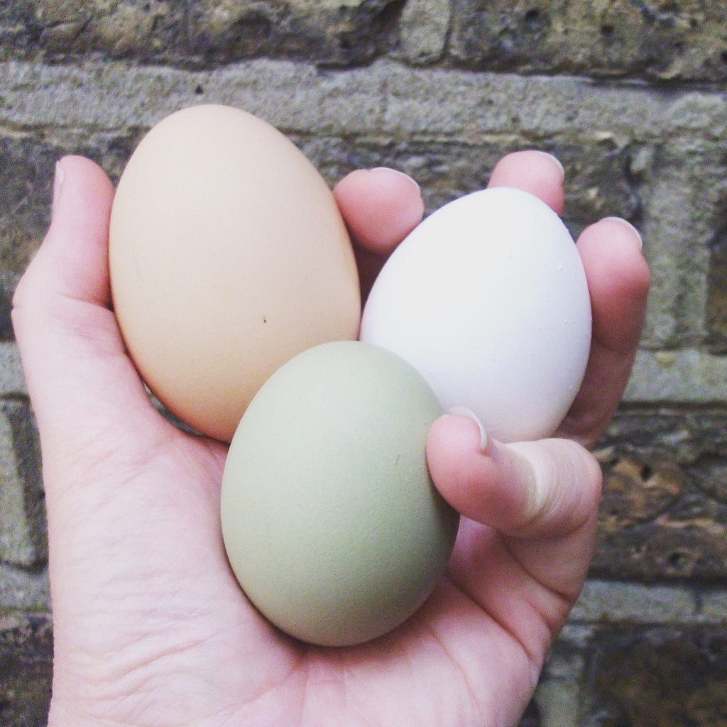 Fresh Eggs (box of 6)