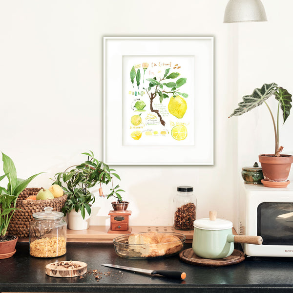 Lemon tree botanical illustration