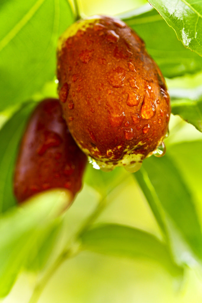8 health benefits of the date palm fruit