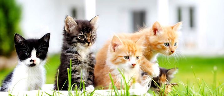 How To Choose The Right Cat Breed For Your Family