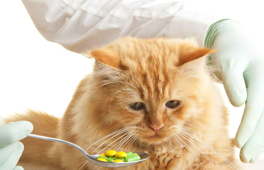 Does Your Cat Need Supplements?