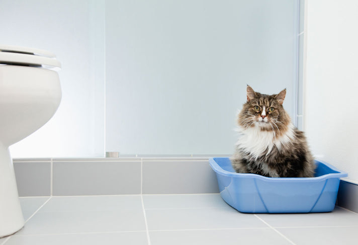 5 Tips For Quickly House Training Your Cat