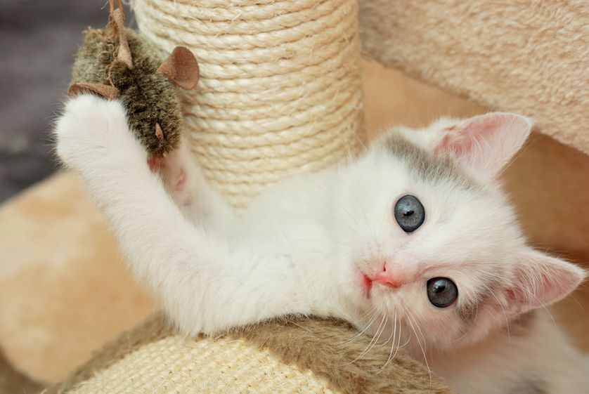 Here's Why Playtime Is Important For Your Cat
