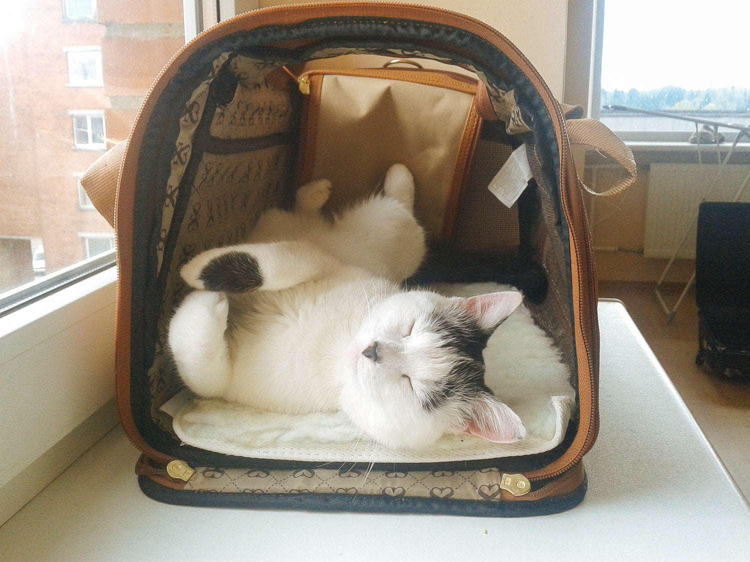 3 Simple Tips For Traveling With Your Cat