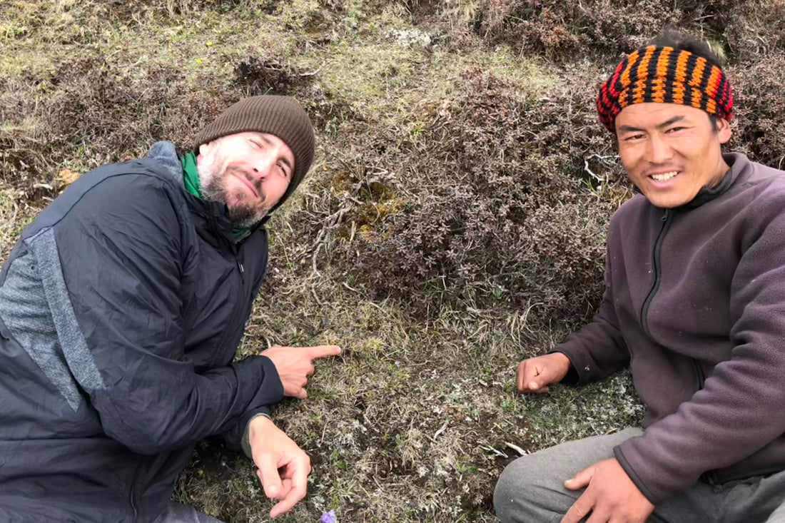 Supporting Bhutanese communities and sustainable Cordyceps sinensis harvesting