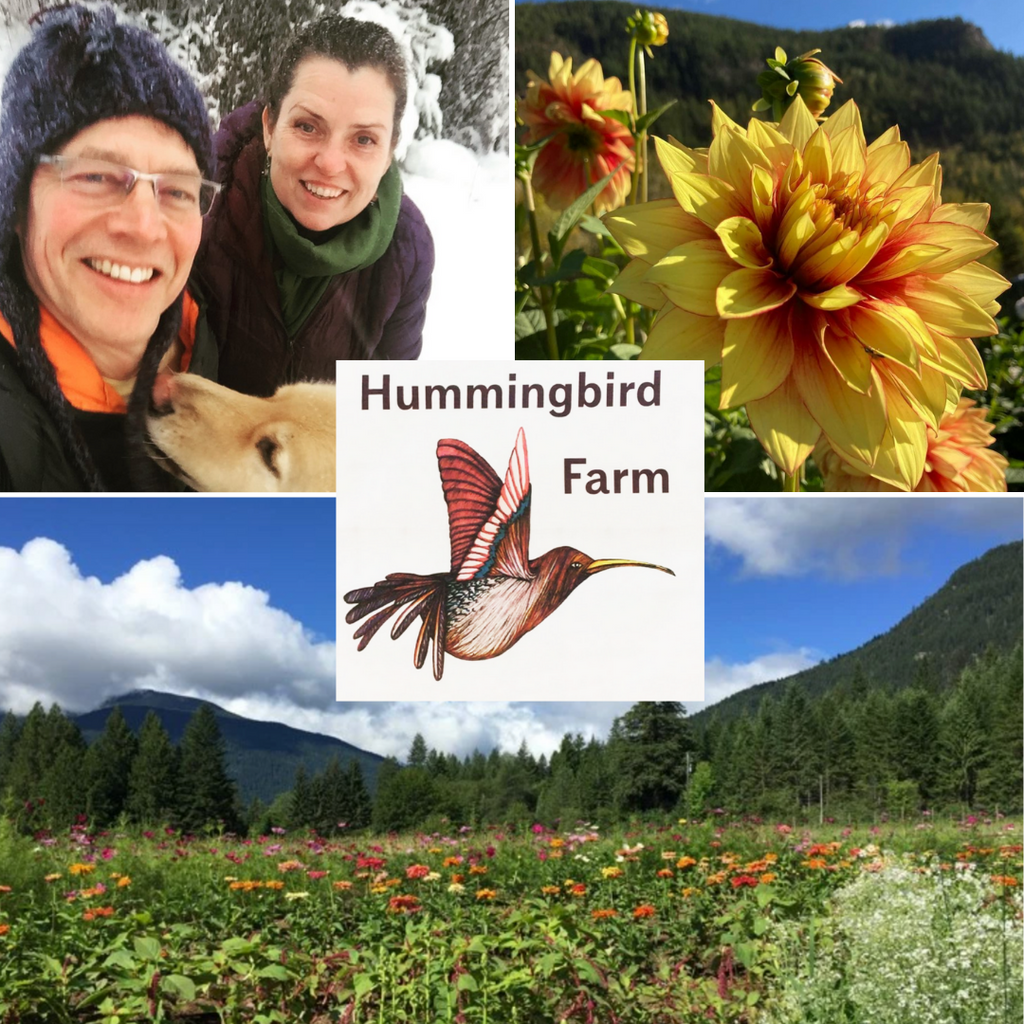 Meet BC Eco Seed Co-op Member Lana Braun of Hummingbird Farm