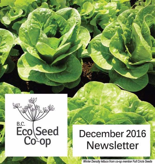 December Newsletter now in your inbox