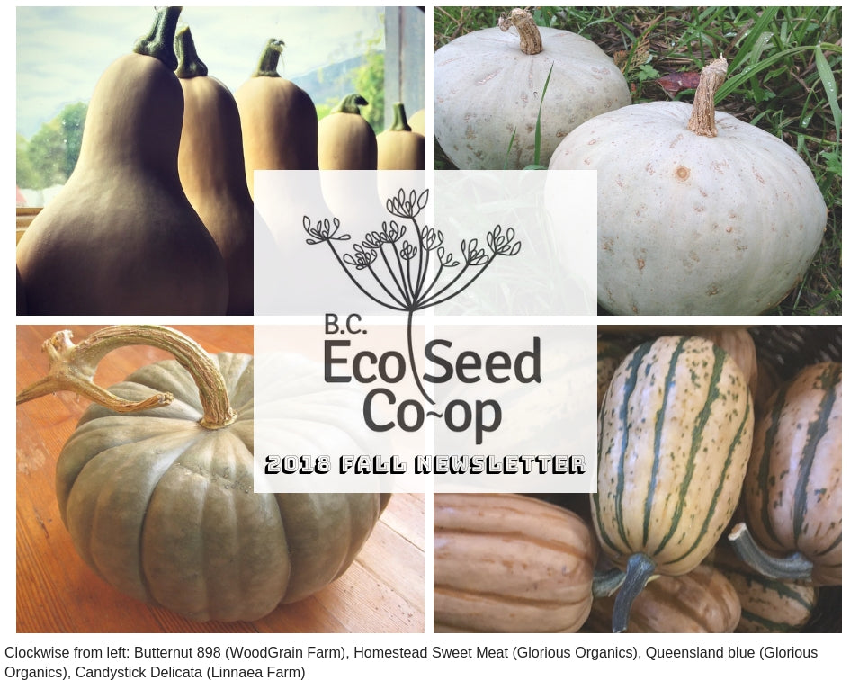 Fall Newsletter now in your inbox
