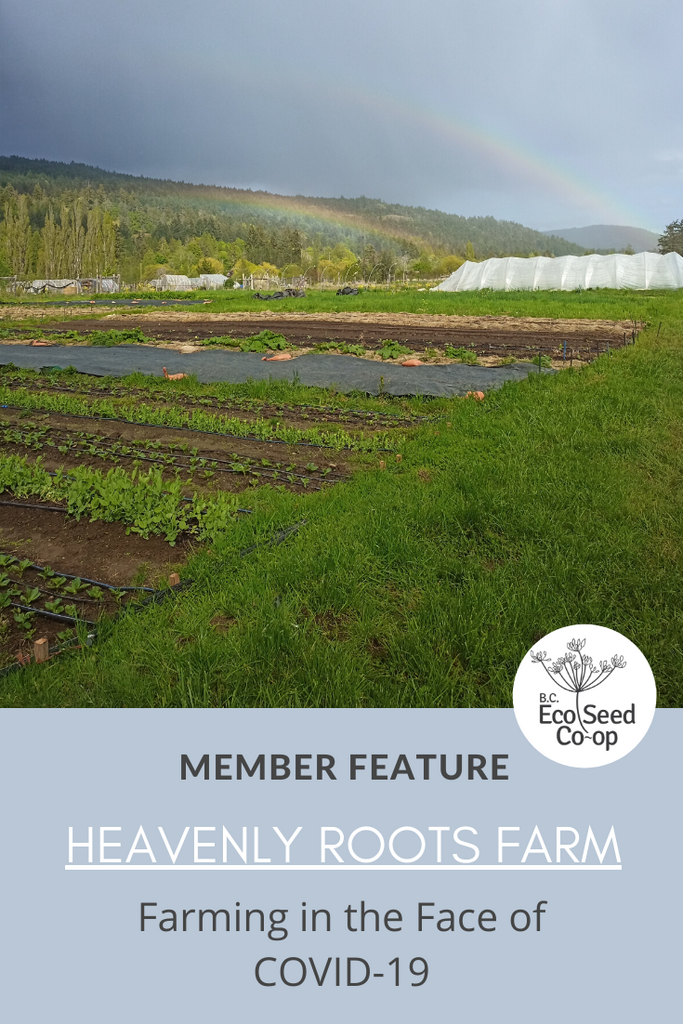 Farming in the Face of COVID-19: An Interview with Heavenly Roots Farm