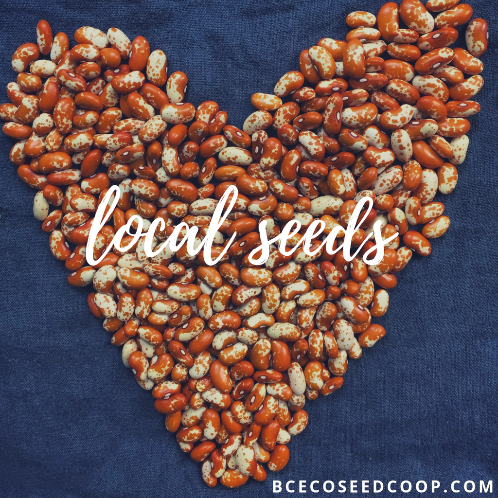 Amazing Seeds - why local, diverse, resilient seeds matter