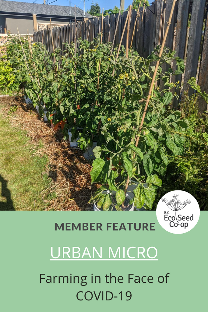 Farming in the Face of COVID-19: An Interview with Urban Micro