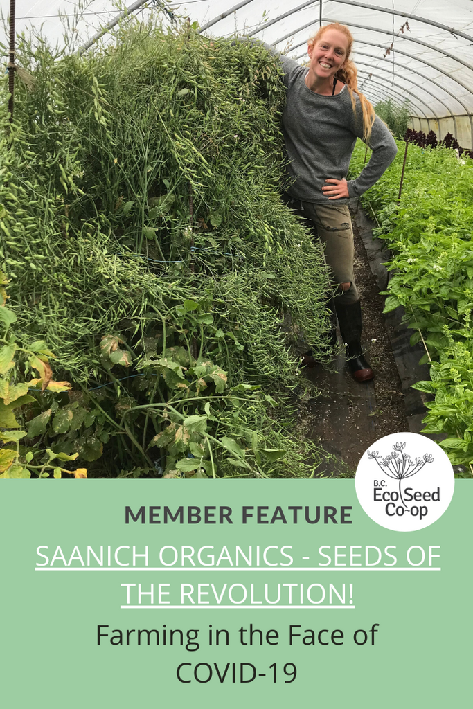 Farming in the Face of COVID-19: An Interview with Saanich Organics - Seeds of The Revolution!