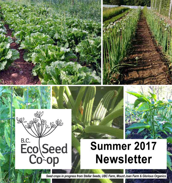 Summer Newsletter now in your inbox