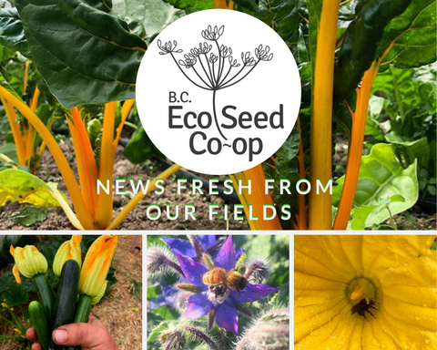News Fresh From Our Fields
