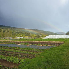 Double rainbow over Heavenly Roots Farm