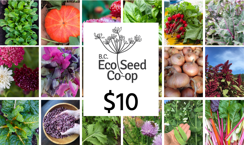 A photo of different vegetables and flowers with the BC Eco Seed Co-op