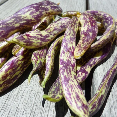 Dragon Tongue Bush Bean