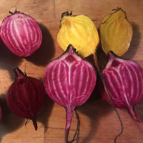 F2 Striped/Gold Beet Mix CO