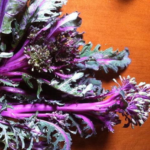 Purple Peacock Broccoli CO