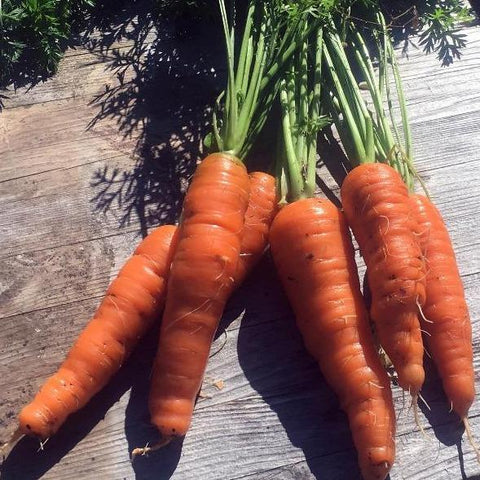 St. Valery Carrot CO