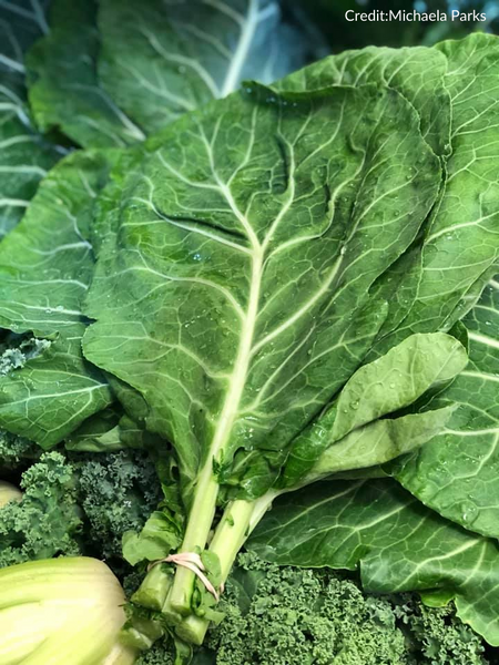 Champion Collards CO