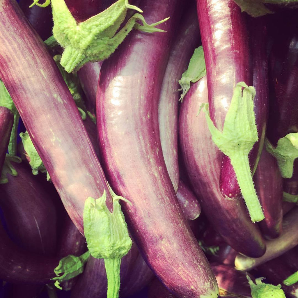 Long Purple Eggplant  CO