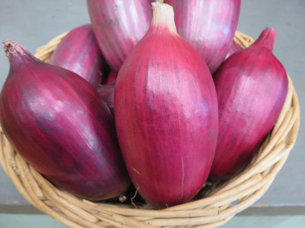 Red Legion Onion