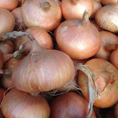 Stuttgarter Onion CO