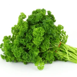 Forest Green Curly Parsley OG