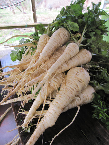 Haloed Crown Parsnip