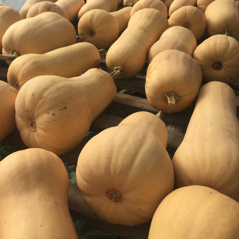 Early Remix Butternut Squash