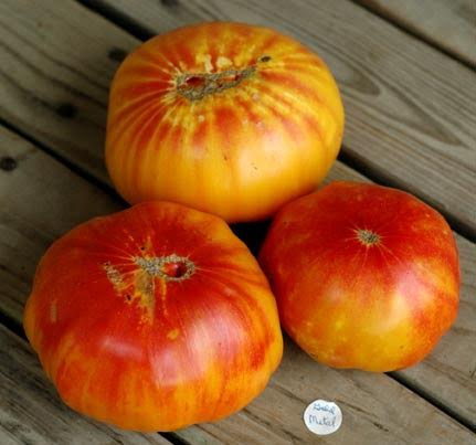 German Yellow Striped Tomato