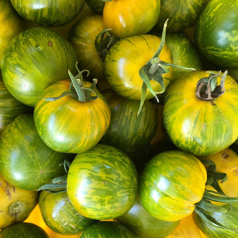 Green Zebra Tomato CO