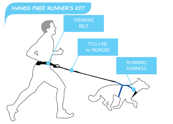 Hands Free Dog Runner's Kit
