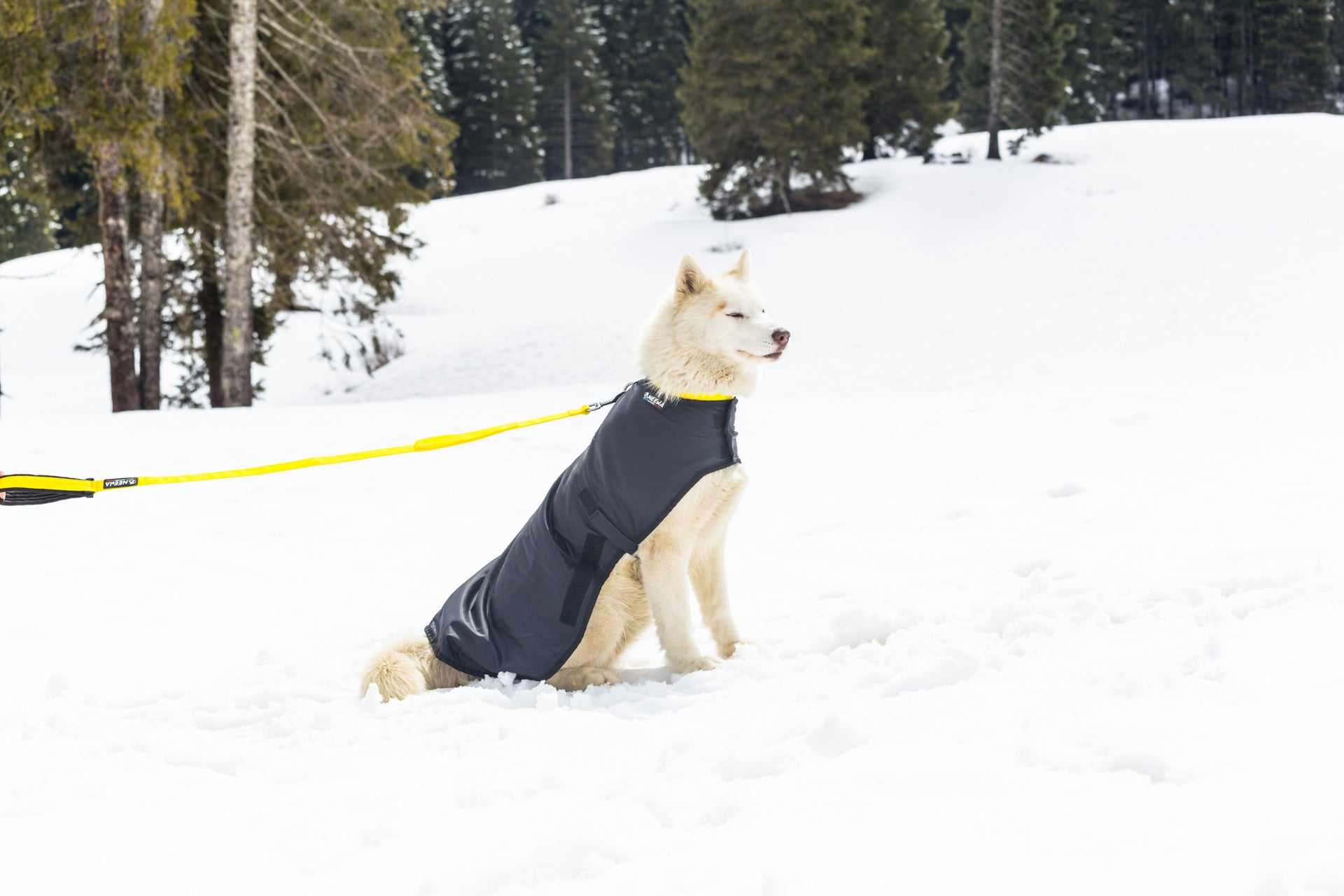 Snow Dog Coat