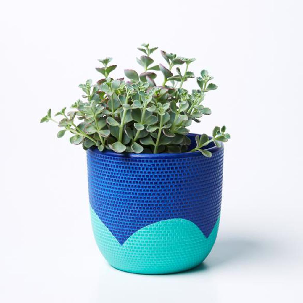 Petal Pot Navy Mint