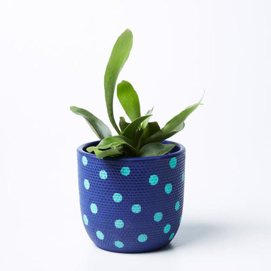 Spot Pot Navy Mint