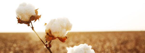 What is Supima? All about our cotton.