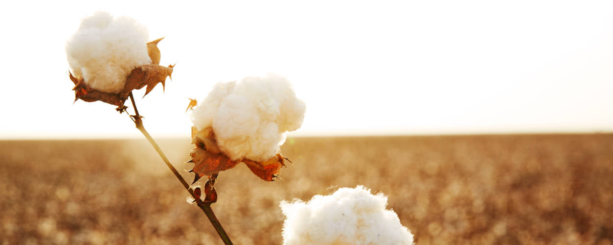 American Grown Supima Cotton