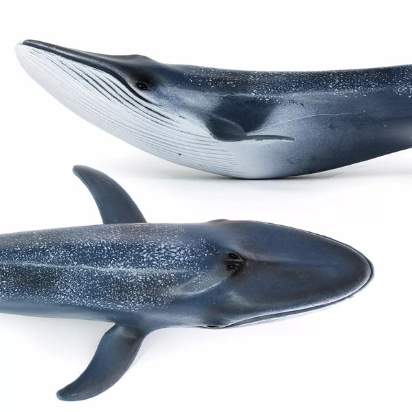 Blue Whale Ocean Animals Realistic Toy Display Gifts Children Boys Girls Nature Wonders Model Animal Figurines Science Biology Ecology Eco Toys