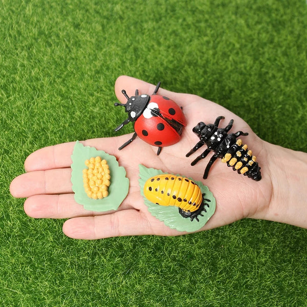Life Cycle Learning Toys Kids Love Animals Plants Fish Birds Insects Biology Science Childrens Toy Gifts Spiders Goose Salmon Chickens Octopus Ladybug