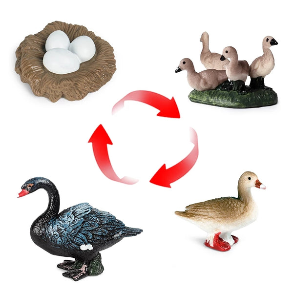 Life Cycle Teaching Toys Interesting Critters Fly Worm Spider Salmon Geese Chickens Ladybug ..